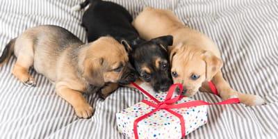 Boże Narodzenie 2020:  6 oryginalnych pomysłów na prezent dla Twojego czworonoga