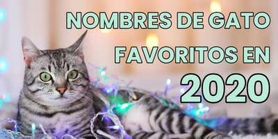 nombres populares para gato