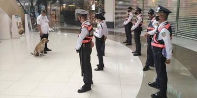 Bezpański pies wchodzi do centrum handlowego. Reakcja ochroniarza sprawia, że klienci wstrzymują zakupy