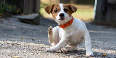 Come riconoscere e curare la dermatite del cane?