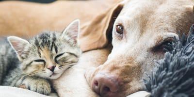 cane e gatto su una coperta