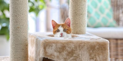 Katze auf Katzenkratzbaum