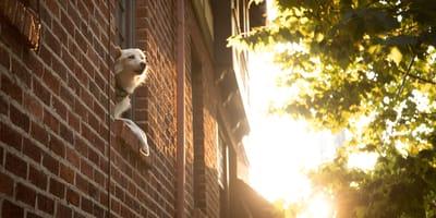 cane-affacciato-al-balcone