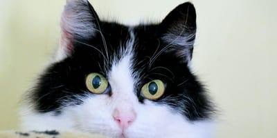 Kot tak tęskni za opiekunką, że... zamienia się w spidermana (VIDEO)