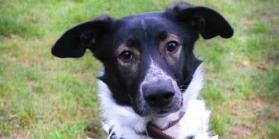 Weihnachtsgeschichte von Husky-Schäferhund bringt ganz Deutschland zum Weinen