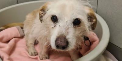 Kurz vor Weihnachten: Schicksal von 19-jährigem Hund sorgt bundesweit für Tränen