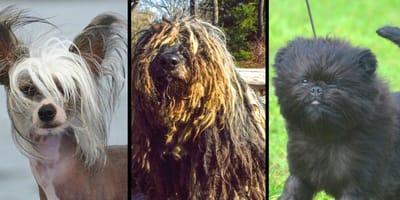 tre razze di cani particolari