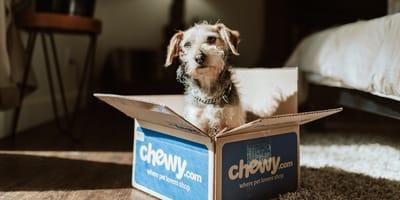 cane in una scatola