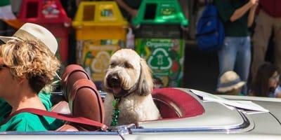 I probiotici possono attenuare lo stress da viaggio nel cane?