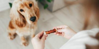 Jak wybrać smaczne i zdrowe przekąski dla psów?