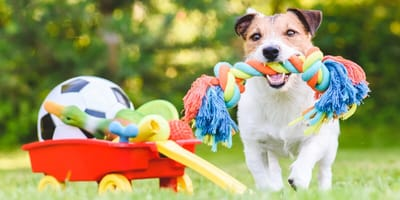 perro con los mejores juguetes