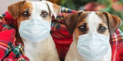 Navidad con perros y coronavirus: todo lo que necesitas saber en estas fiestas con restricciones