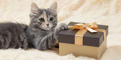 13 ideas de regalos para gatos que harán feliz a tu minino en Navidad o Reyes