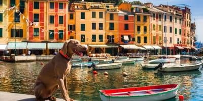 Le 16 razze di cani italiani ufficialmente riconosciute