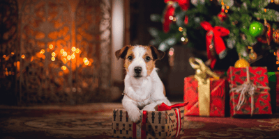 What to get your dog for Christmas: Best dog gift ideas