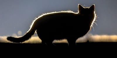 Katze nachts bei Dunkelheit