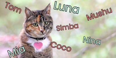 ¿Cómo elegir el nombre de tu gato? Trucos para escoger el mejor