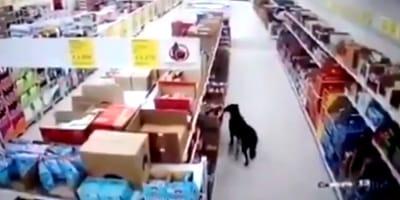 perro roba tienda