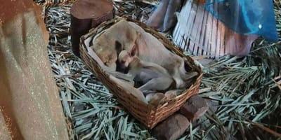 perro-nacimiento
