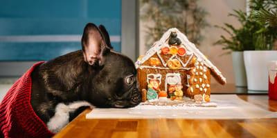 Hund vor Lebkuchenhaus