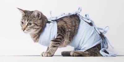 Ile kosztuje sterylizacja kotki? Jakie są koszty dodatkowe?
