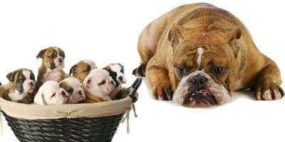 Mi perra rechaza a sus cachorros: ¿Qué puedo hacer?