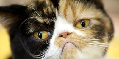 Unangenehme Gerüche: Was stinkt unseren Katzen?