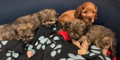 Tierheim zeigt zuckersüße Hundebabys, doch niemand jemand liest das Kleingedruckte