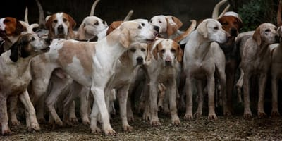perritos muchos