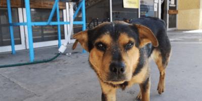 Perro en Nuevo Laredo espera a su dueño afuera del hospital