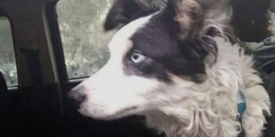 perro encadenado auto