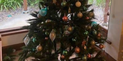 Vede l'albero di Natale muoversi: c'è un intruso (Foto)