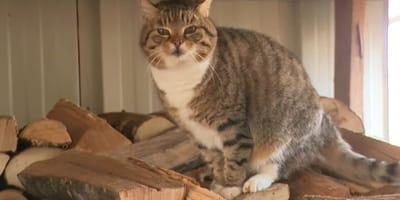 Starsza pani znalazła zagubionego kota: kiedy zbadał go weterynarz, oboje przeżyli szok
