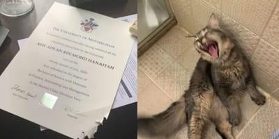 Kot winowajca i podarty dyplom