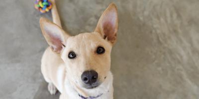 Babbo Natale arriva al canile: doni per decine di cani (Video)