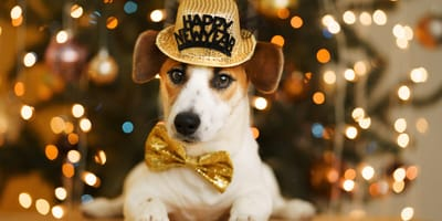 10 New Year's resolutions for you and your pet