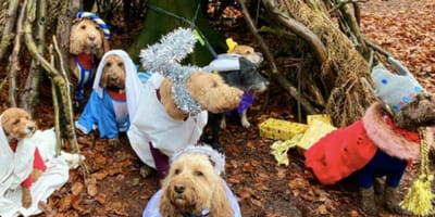 A canine nativity scene