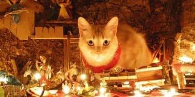 """Los gatos de los lectores de Wamiz """"atacan"""" los belenes de sus casas"""