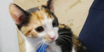 <p>Poszkodowana koteczka</p>