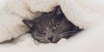 Cómo abrigar a mi gato para protegerlo del frío