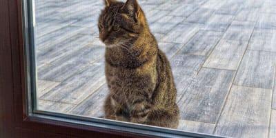 gato atigrado mirando cristal
