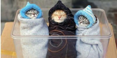 10 zdjęć śpiących kotów – tak rozczulającej galerii jeszcze nie widzieliście