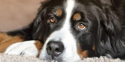 Quali sono i giusti alimenti per cani con diarrea?