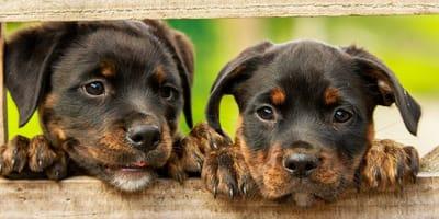 Los nombres mexicanos para perros más bonitos y originales