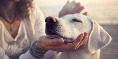 Crema Positón para perros: cómo usarla según el veterinario
