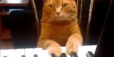 Gatto-sul-pianoforte