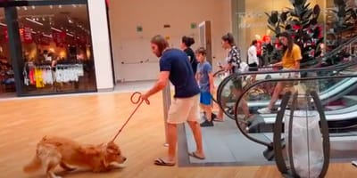 When people see how owner takes the escalator with his dog, they start to laugh
