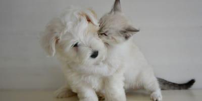 Quali sono gli errori da evitare con un cucciolo?