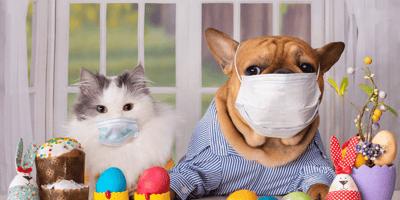 perro y gato con mascarilla
