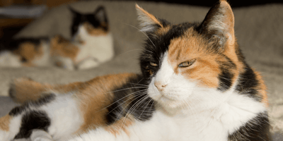 Sleeping owner is woken up by his frantic cats; who end up saving his life